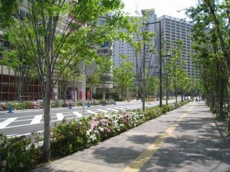都市計画道路 武蔵小杉駅南口線(パークシティ武蔵小杉付近)