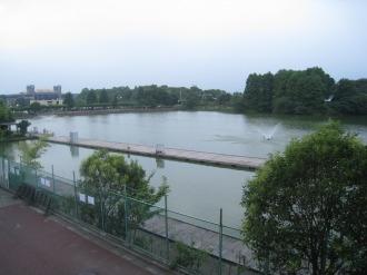 等々力緑地の釣池