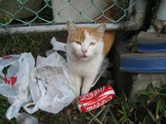 ごみ置き場にいた猫
