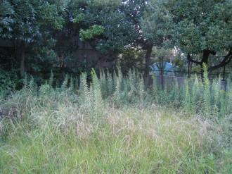 生い茂った雑草