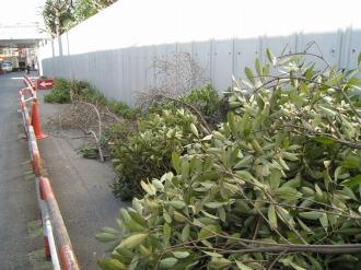 剪定された植栽2
