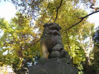 今井神社のイチョウ