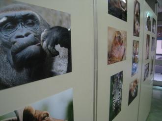写真展・武蔵小杉動物園