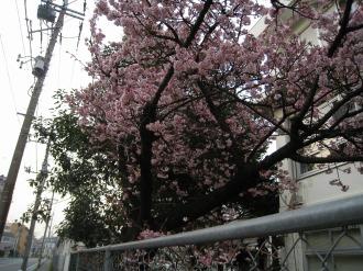 中原電車区の八重桜