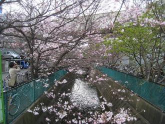 二ヶ領用水の桜(2009年3月28日撮影)