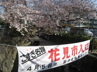 渋川の桜(サライ通り付近)