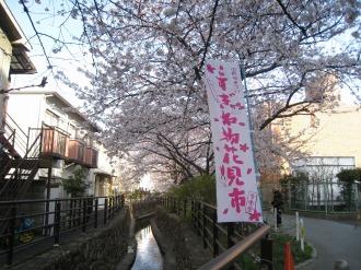 二ヶ領用水の桜(総合自治会館付近)