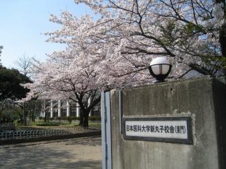 日本医科大学新丸子校舎の桜