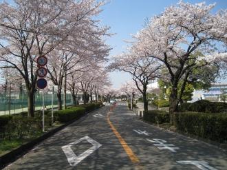 等々力緑地の桜(1)