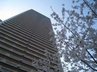 パークシティ武蔵小杉の桜(1)
