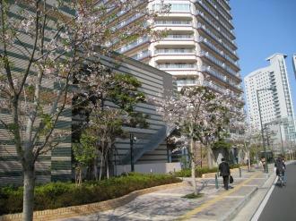 パークシティ武蔵小杉の桜(2)