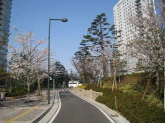 パークシティ武蔵小杉の桜(3)