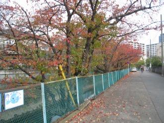 渋川の紅葉