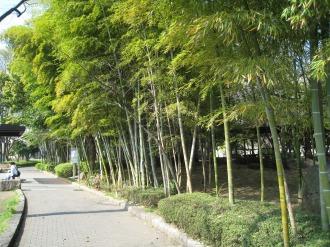 等々力緑地の竹林