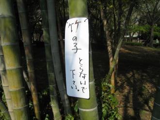 竹の子とらないで下さい。